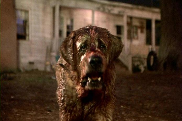The Dogs of Stephen King